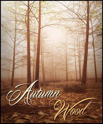 Autumn Wood...