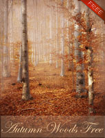 Autumn Wood