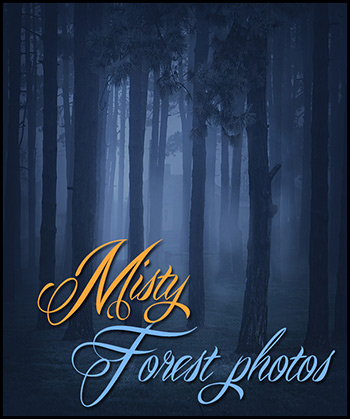Misty Forest Photos