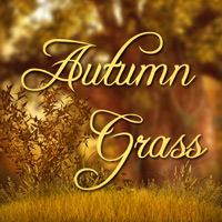 Autumn Grass 2
